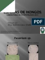 Esporas Hongos Dra Casco (UNA)
