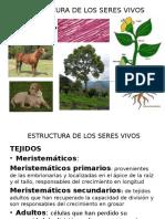 Generalidades de La Madera