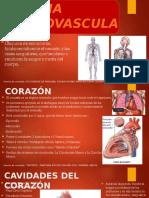 Presentación Sistema Cardiovascular