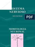 Sistema Nervioso Neuronas