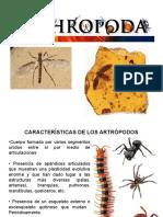 Introducción Del Curso Entomología y MIP
