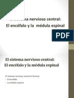 anatomia_sistema_nervioso (1).pdf