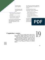 Cognicion y Corteza (1)