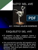 Esqueleto Del Aves 2016