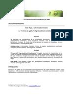 Agalla PDF (1)