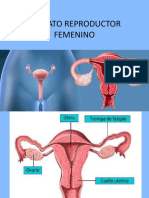 Histologia Resumen Aparato Reproductor Femenino