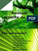 animale_ocrotite