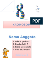 KROMOSOM.pptx