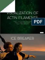 Visualisation of Actin Filaments