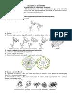 Classificação Floral.doc
