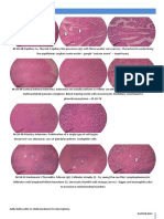 Diseases_of_the_Endocrine_Syst.pdf