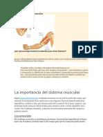 Importancia de Los Musculos