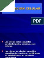 3. Adaptacion Celular