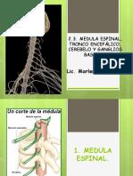 MÉDULA ESPINAL (1).ppt