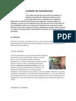 Ficha para el cuidado de Camaleones.docx