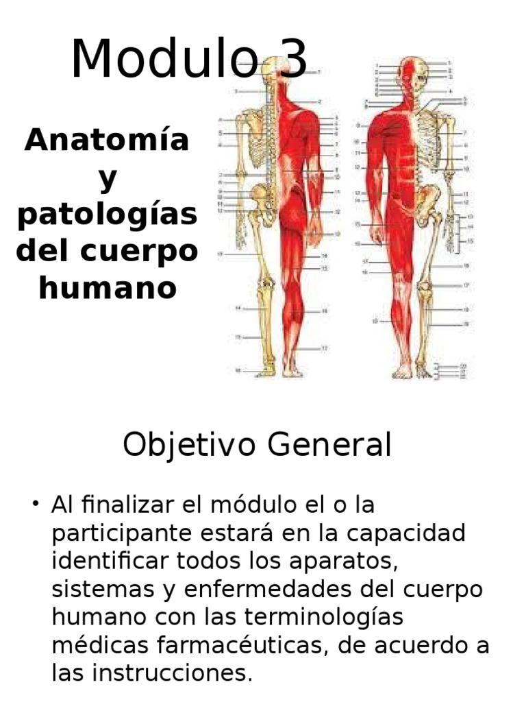 Asombroso Suministro De Sangre Anatomía Apéndice Ornamento ...