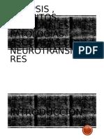 Sinapsis y circuitos neuronales