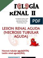 Patología Renal II