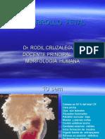 03. Desarrollo Fetal
