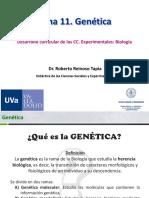 T11. Genética