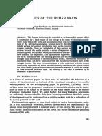 Thermodynamics of the Human Brain - J. S. Kirkaldy