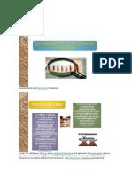 Características de la.docx