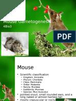 Mouse Gametogenesis