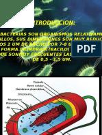 Estructura Bacterium Grupo 1 Microbiologia General