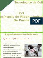 2-3 Biosintesis de RN de purina.pptx