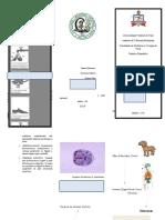 Folder Parasito Digestório