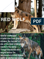 RED WOLF PRESENTATION