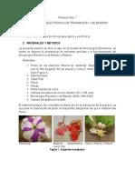 Microscopía Electrónica de Barrido_Aplicaciones_Fisiología