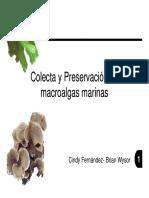 Colecta Preservacion Macroalgas Marinas