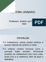 SISTEMA_URINARIO.ppt