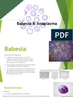 Babesia-y-Anaplasma (1)