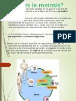 meiosis-y-gametogenesis.ppt