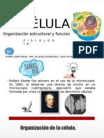 LA CÉLULA Organización Funcional y Estructural