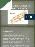 Inervacion Sensitiva Del m.s.