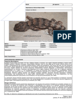 Diplolaemus_bibronii_12RCE_INICIO.pdf