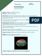 Diagrama de La Informacion Sensorial