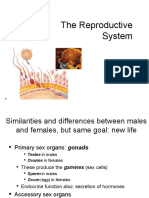 the-reproductive-system-2.ppt