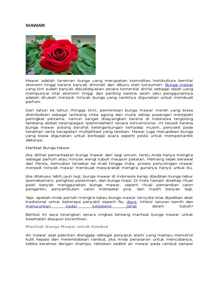Bunga Mawar Termasuk Tanaman Dikotil Atau Monokotil - Mawar Ku