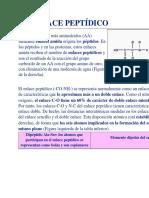 EL ENLACE PEPTÍDICO.docx