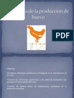 Fisiología Producción Huevo