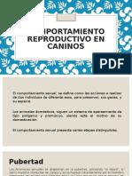 Comportamiento Reproductivo en Caninos