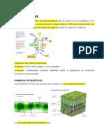 Tema 15c Anabolismo Fotosíntesis