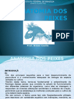 Anatomia Dos Peixes