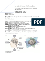 Ch 7 Neuro Study Guide