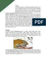 Tigrul Siberian - Etologie