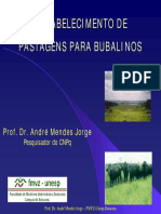 11-PASTAGENS_BUBALINOS